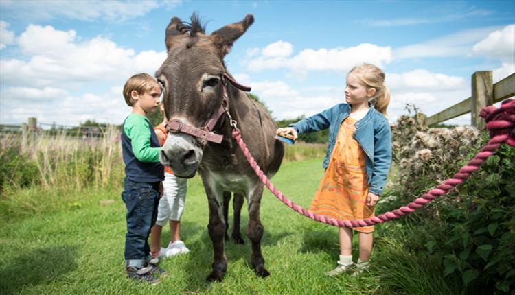 Roves Farm Donkey